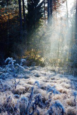 Wald hinter gefrorener Wiese