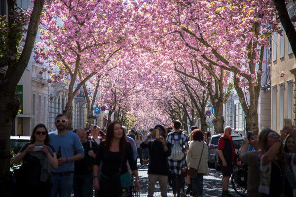 viele Besucher beim Kirschblütenfest in Bonn