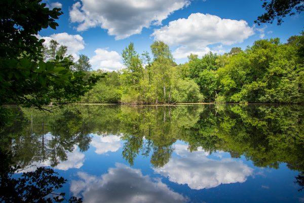 Wald und Wolken spiegeln sich im Wasser