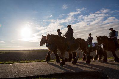 Reiter auf Pferden vor Abendsonne
