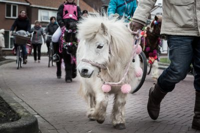 Kleines weißes Ponny wird an der Leine geführt